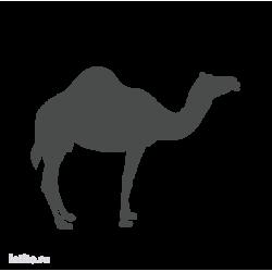 0133. Верблюд