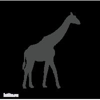 0135. Жираф