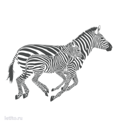 0205. Бегущие зебры