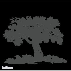 0260. Старый дуб