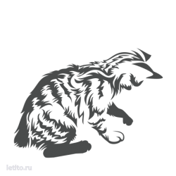 0498. Играющий котёнок