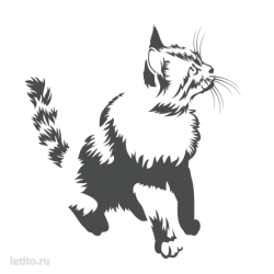 0502. Кот