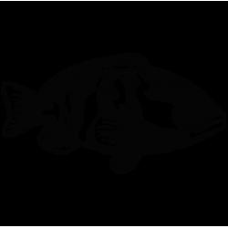 2047. Рыбка