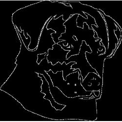 2122. Собака