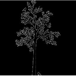 2251. Дерево
