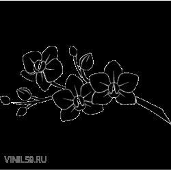 2952. Цветок ОРХИДЕИ