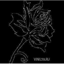3031. Роза