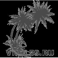 3211. Пальмы