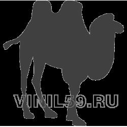 4134. Верблюд