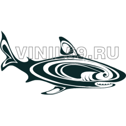 4135. Акула