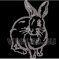 4583. Кролик
