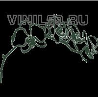 5004. Цветущая ветка сакуры