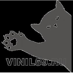 5081. Кот