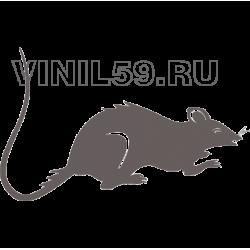 5173. Крыса
