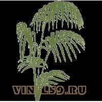 5538. Пальма