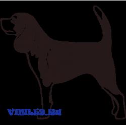 6018. Пёс породы Бигль