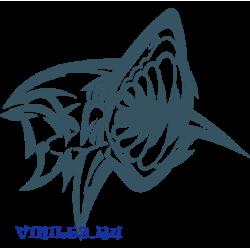 6024. Акула